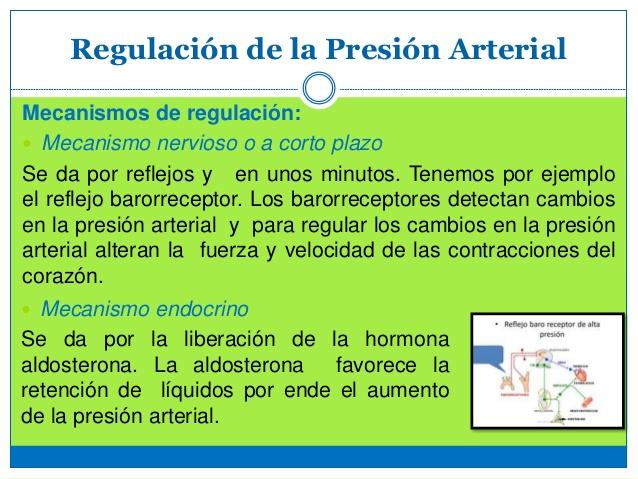 Mecanismos que regulan la presión arterial - La presión..